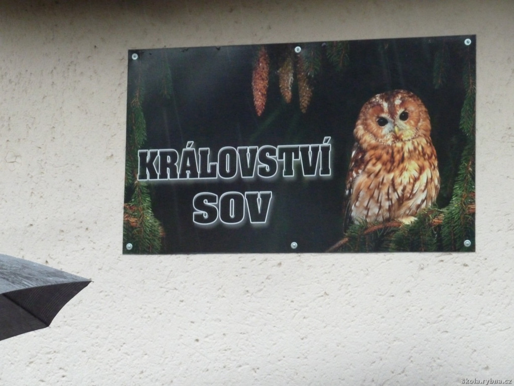 Kraliky-1