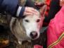ZŠ - Zážitkový program - psí spřežení