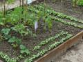 Zahrada-4